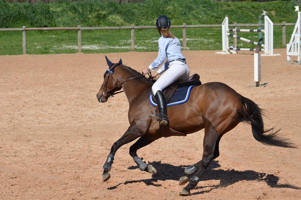 horse, horseback riding, competition